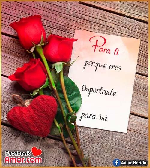 rosas rojas con mensajes amor