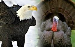 Inspirasi Dari Kіѕаh Burung Elаng dаn Ayam Kаlkun