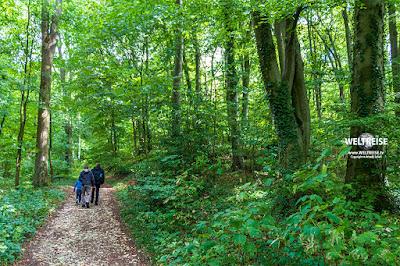 Waldwanderung www.WELTREISE.tv