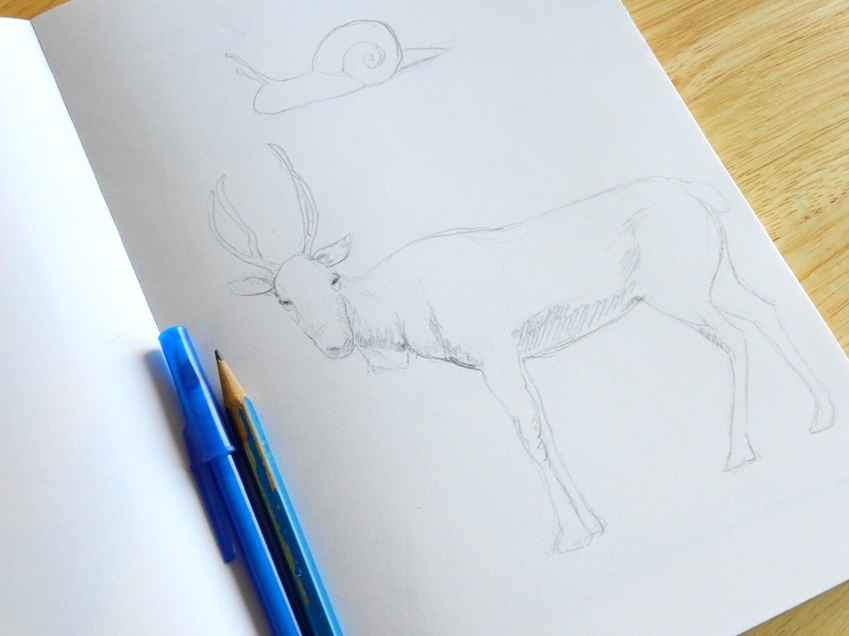 deer pencil drawing
