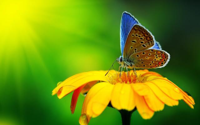 Close up foto van een mooie vlinder op een gele bloe