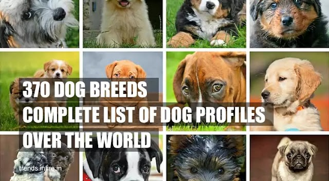 All Dog Breeds Info:  Complete List of 370 Dog Profiles Over the World