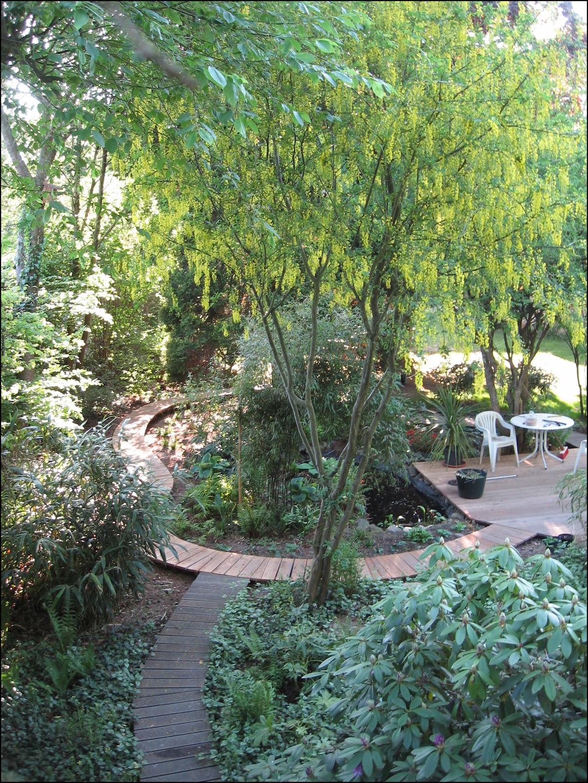 bambus kamelien yuccas best of 2011 bau der terrasse und des dschungelpfads. Black Bedroom Furniture Sets. Home Design Ideas