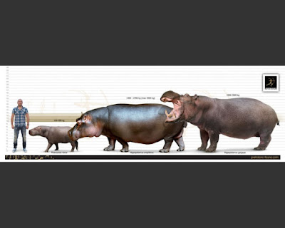 Hippopotamus past and present