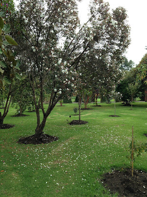 Árbol joven creciendo en un parque
