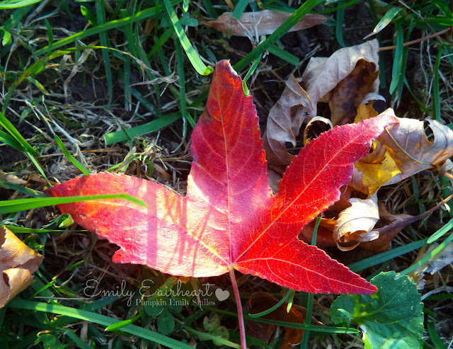 Sunlight on a red leaf.