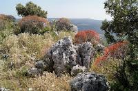 Euforbia tra le rocce