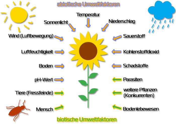 Biotische Faktoren Zuordnen Unterrichtsmaterial