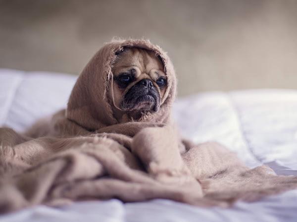 The Benefits of Sleep for Long-Term Health