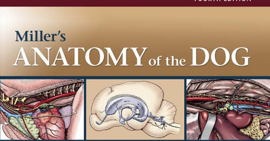 Miller's Anatomy of the Dog 4th Edition | AJLOBBY.COM