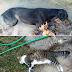 Πρέβεζα:Θλίψη και αποτροπιασμός για τον θάνατο αδέσποτων ζώων στην περιοχή του Βράχου