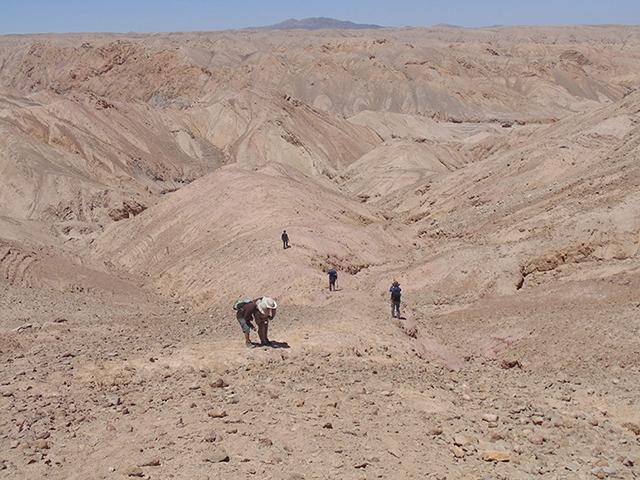 El descubrimiento, realizado en pleno Desierto de Atacama, se suma a otros fósiles de la fauna marina que habitó el lugar hace unos 160 millones de años, como pliosaurios y plesiosaurios.