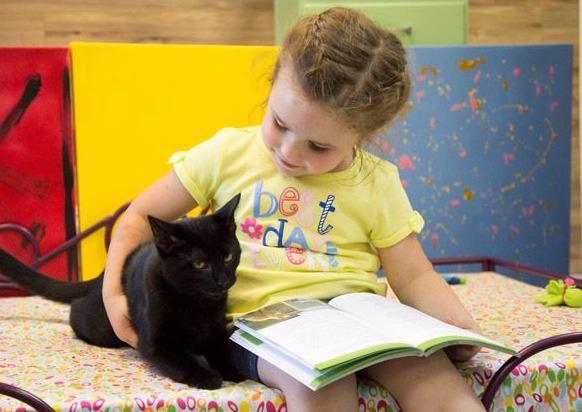 cb 7 - 10 Gatos pretos lendo livros