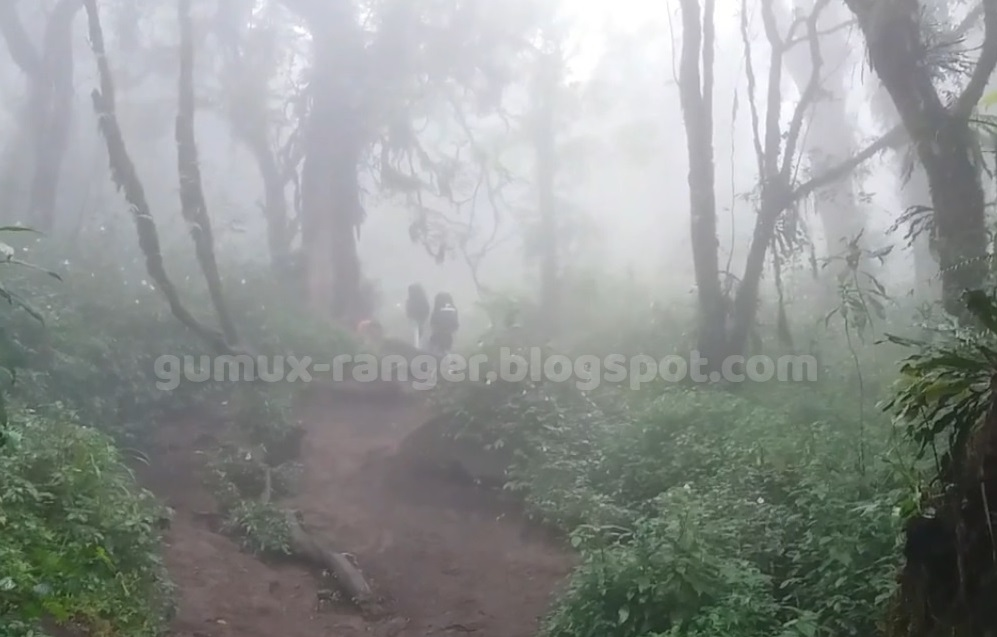 Cara Menentukan Arah Mata Angin Saat Tersesat di Tengah Hutan