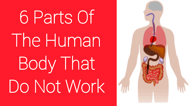 6 Parts Of The Human Body That Do Not Work