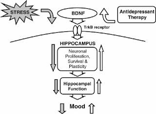 Crane Medicine: The Biology of Stress and Depression Pt. 5