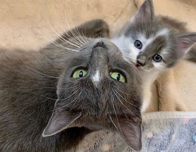 Ослабленная и исхудавшая кошка с больной лапой боролась за жизнь и здоровье своих котят