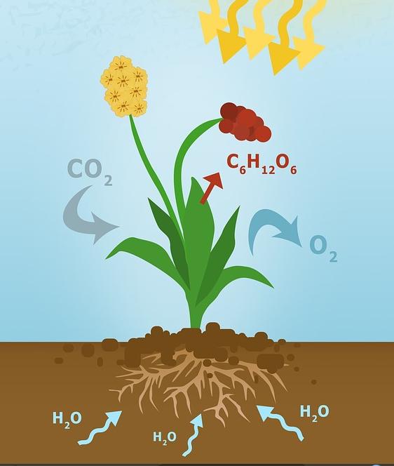 Hubungan Matahari dan Tumbuhan dalam Proses Fotosintesis