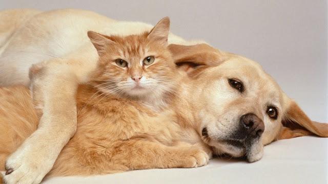Kafshët shtëpijake ulin ankthin me 35%, zbulon studimi