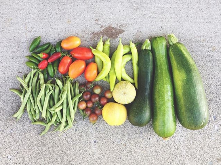 Summer veggie harvest // Zone 6 & 7 Garden Tasks for September // www.thejoyblog.net