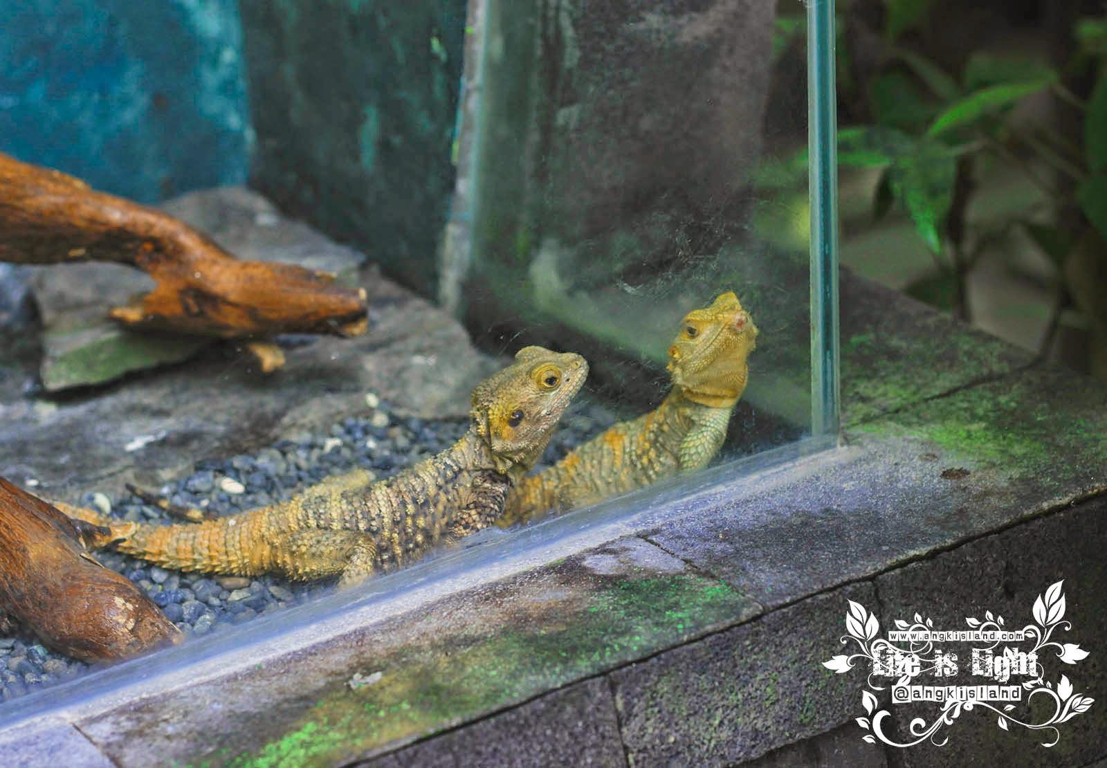 reptil Gembiraloka
