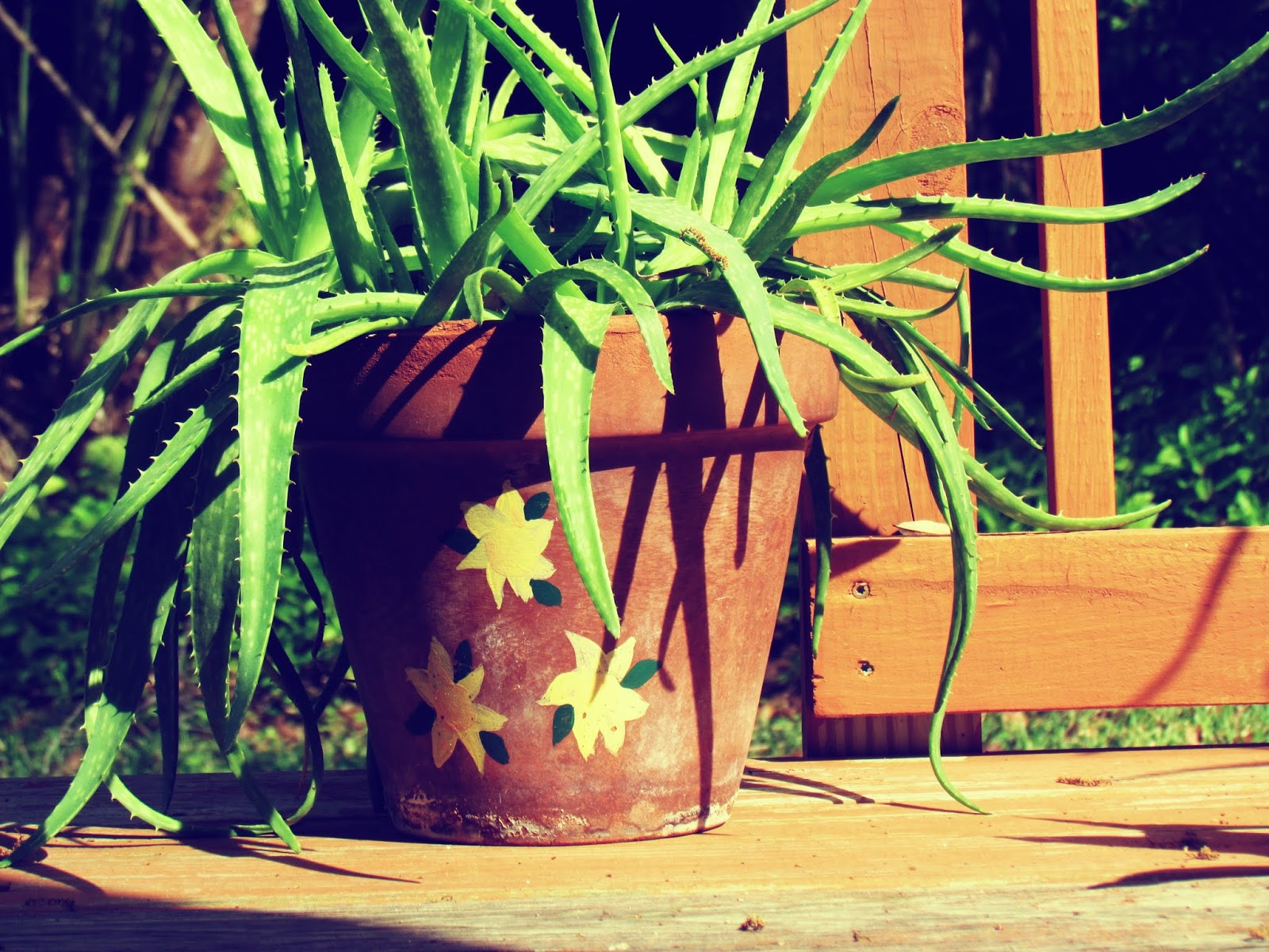Aloe vera plant sitting in the sun on a Florida porch in the backdrop of mother nature + plant pottery painted with yellow flowers in the backyard