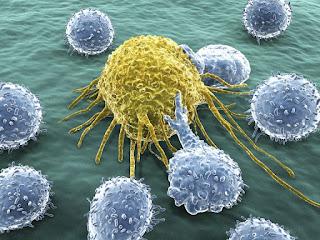 kepentingan sistem pertahanan dan imuniti badan