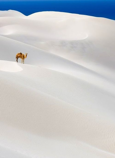 10 Awe-Inspiring Desert Photographies that Will Actually Make You Want to Go There - National Geographic