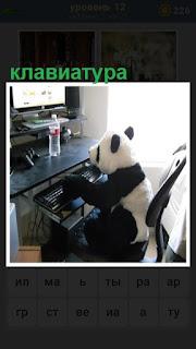 около компьютера сидит панда за клавиатурой в кресле