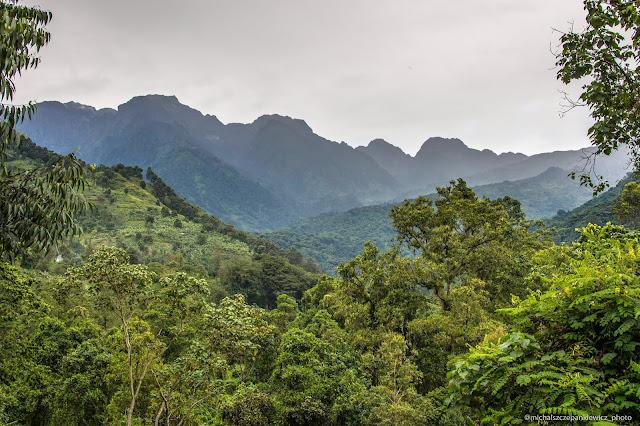 Park Narodowy Góry Ruwenzori w Ugandzie