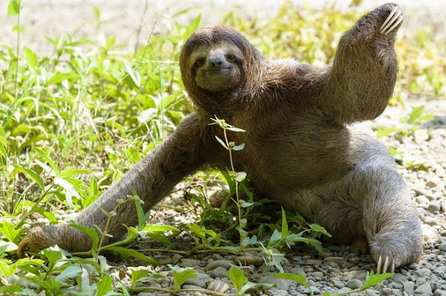 hewan paling lambat