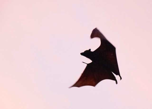 Being a Bat Might Be Fun!