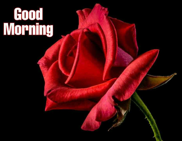 Awesome Good Morrning image with red rose flower