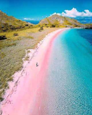 pantai pink flores