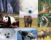 Sustentablidade: Da utilidade dos animais