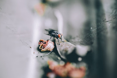 5 طرق سهلة وبسيطة للتخلص من الذباب