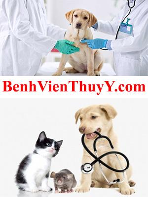 BenhVienThuY.com