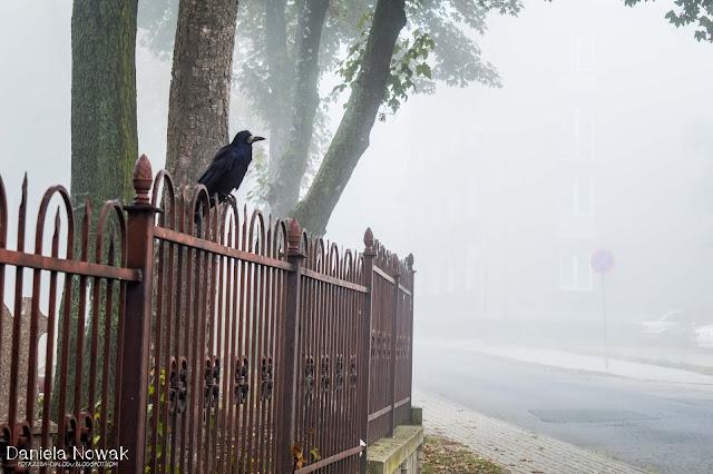 Jest taka mgła, że ptaki chodzą na piechotę - koło cmentarza komunalnego, ul cicha