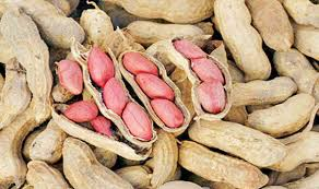 Groundnut Crop