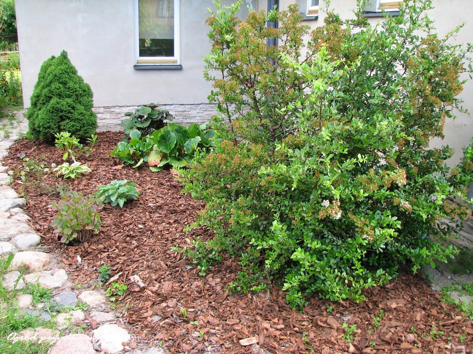 rabata cienista, ogród przydomowy, ogród za grosze