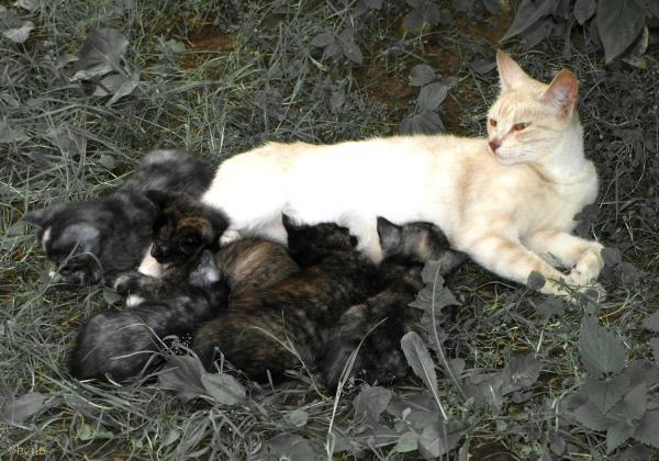 riga street cats