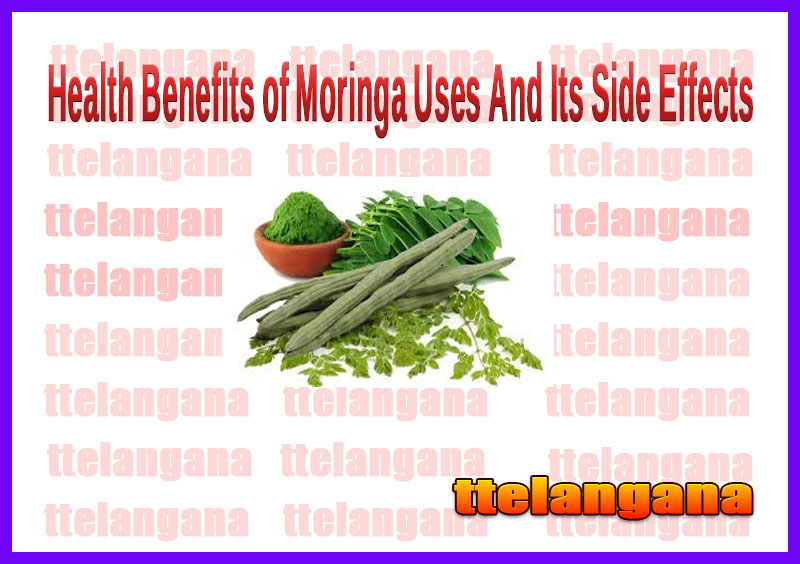 Health Benefits of Moringa Uses And Its Side Effects