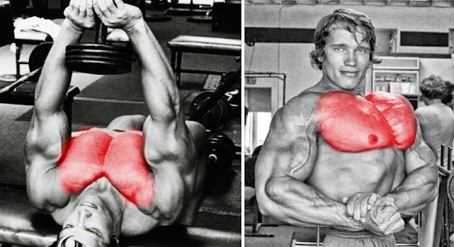 This Exercise Helped Arnold Get His Legendary Chest