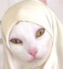 gambar kucing berhijab lucu