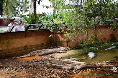Taman Buaya Melaka Malaysia