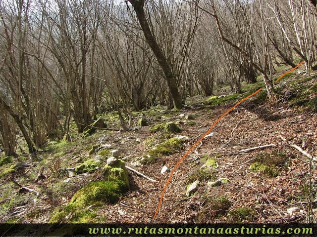 Sendero entre bosque