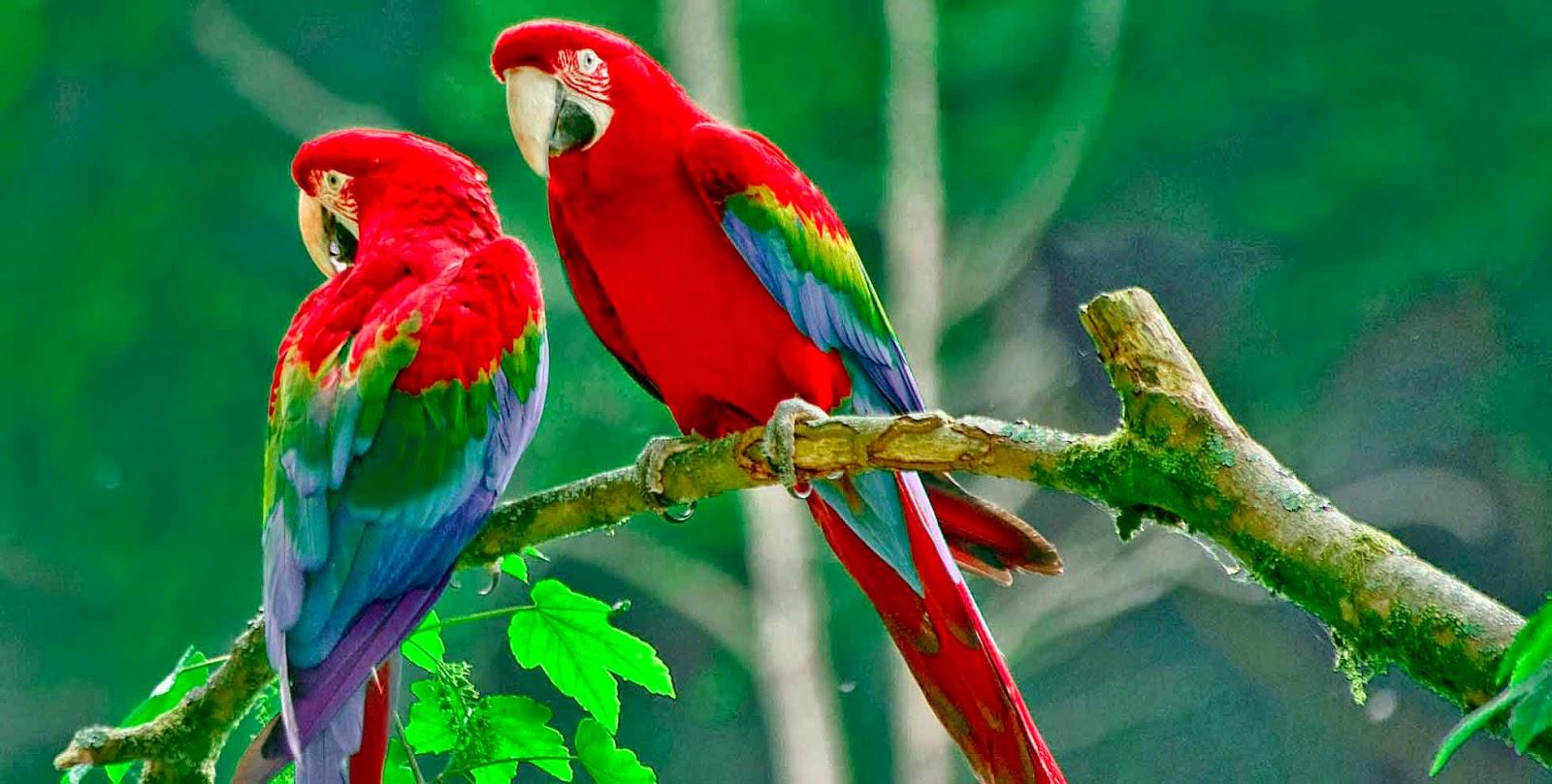 birds of paradise beautiful hd wallpaper desktop | high definitions