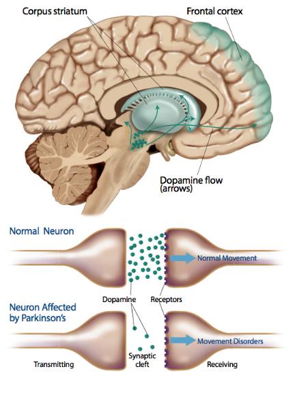 Dopamin flows