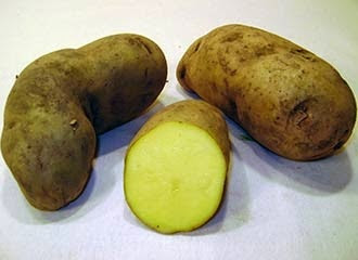 Huamantanga potato, Potatoes Peru, 3.000 varieties of potatoe, Peru and the potatoe native