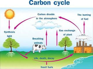 कार्बन चक्र का चित्र